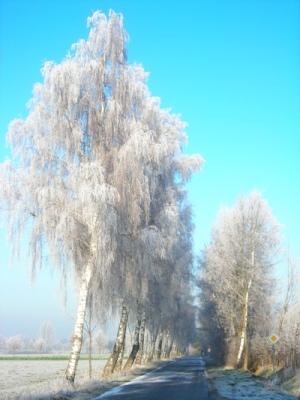 Winter_selhorst